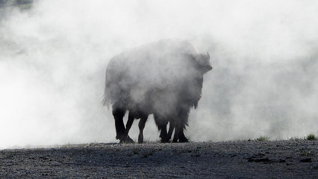 Réalisation d'un film documentaire à Yellowstone Wyoming